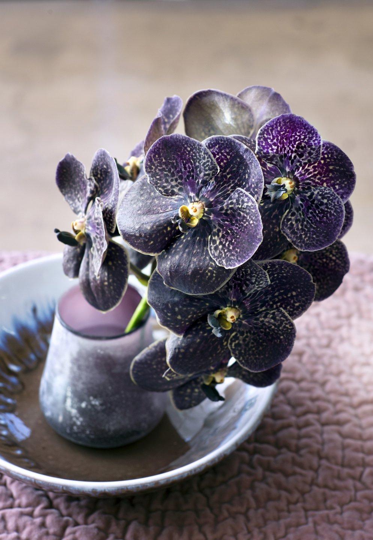 orchidee_2016-3.jpg