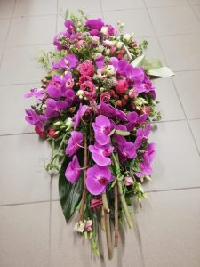 orchidee fuchia